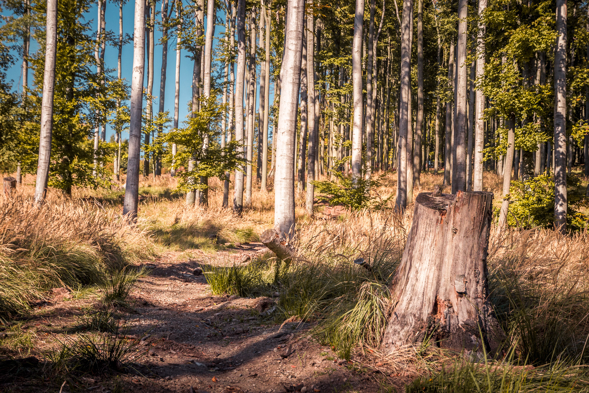 Jeseň-Bukový-les