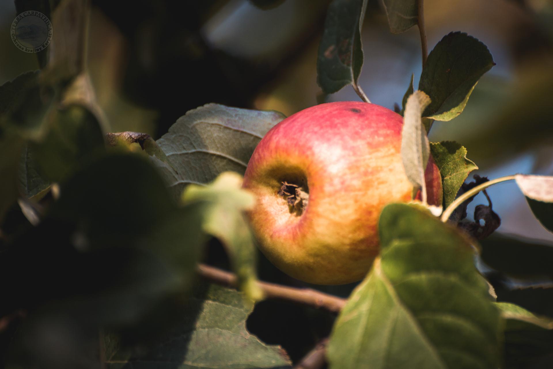 Jeseň-jabloň