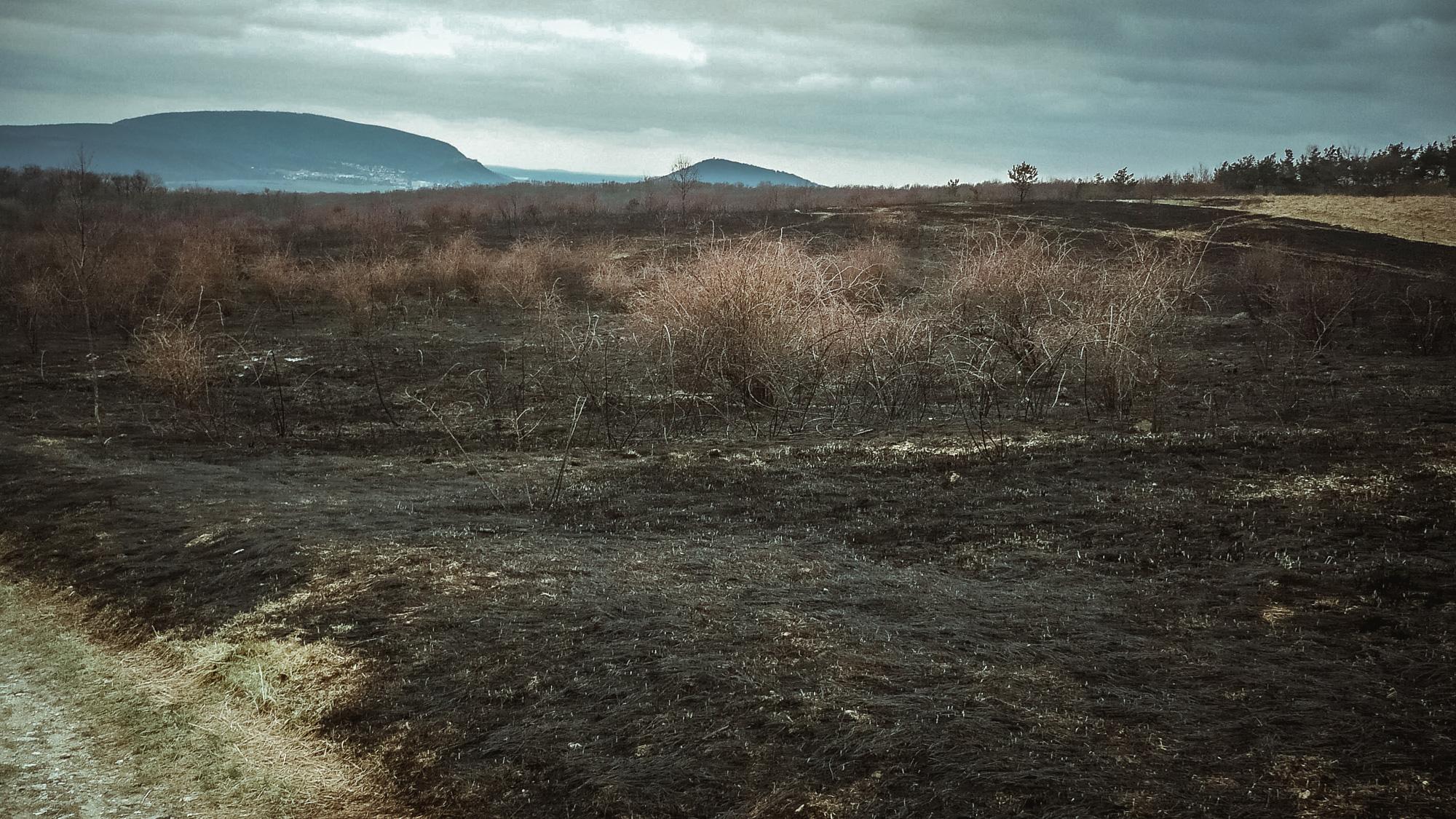Lúka po veľkom požiari v roku 2011 (foto: Lívia Poláchová)