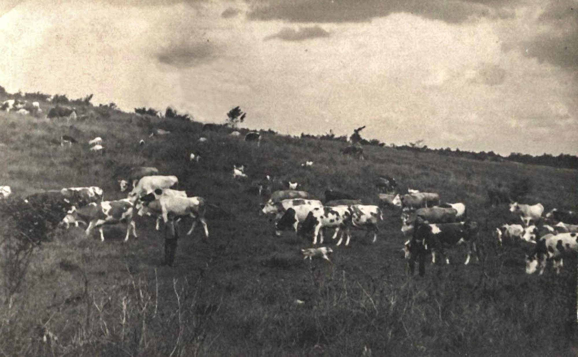 V 20-tych rokoch 20. storočia sa nerovný terén lúky využíval na pasenie dobytka (foto: Matúš Šrámek)