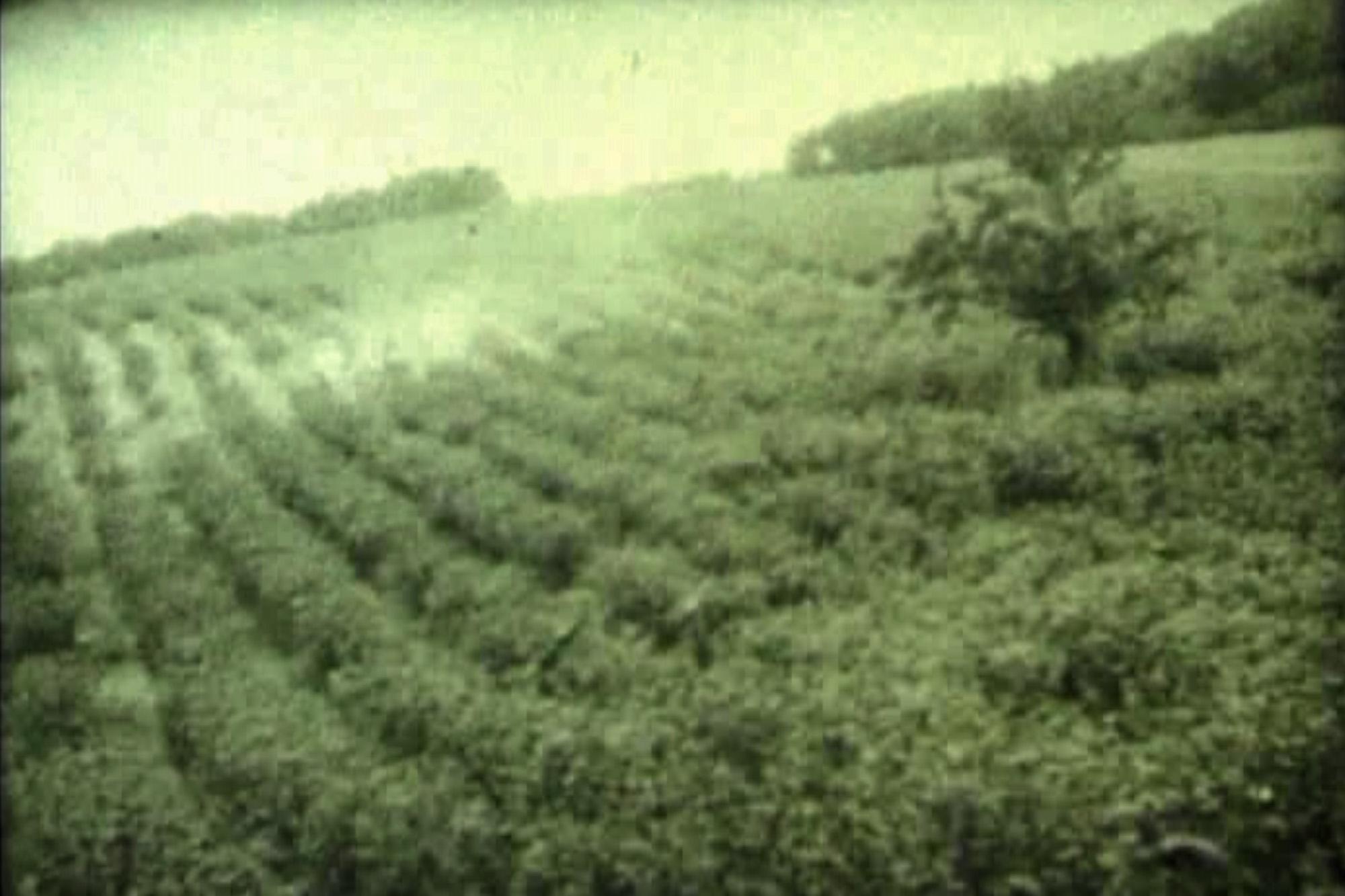 V 60-tych rokoch 20. storočia lúku karloveskí družstevníci zarovnali a vysadili kríky čiernych ríbezlí (foto: Vladimír Suchánek)