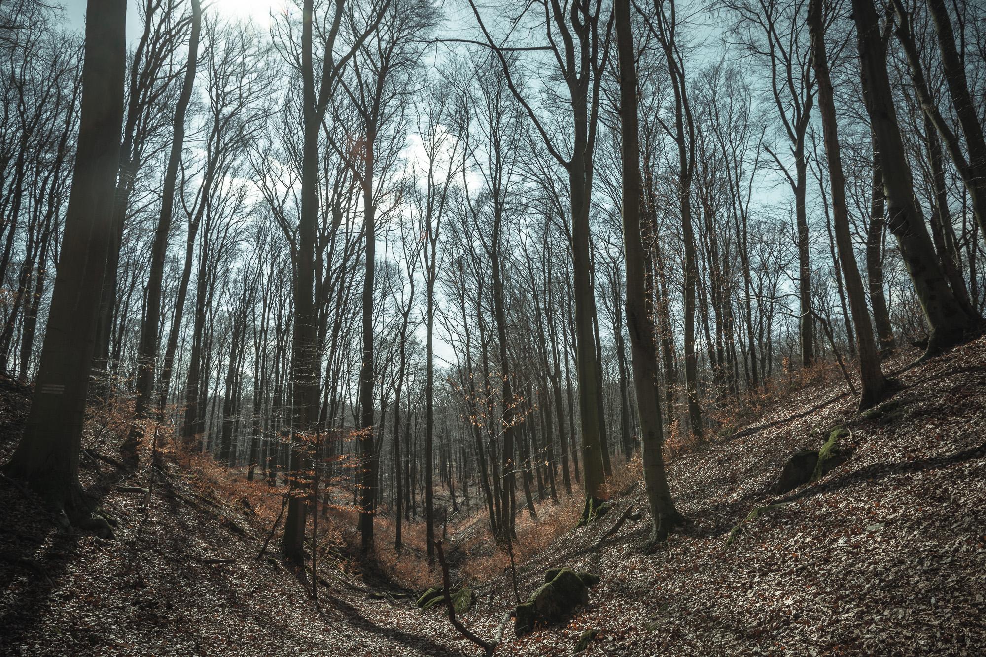 Bratislavský lesopark-12